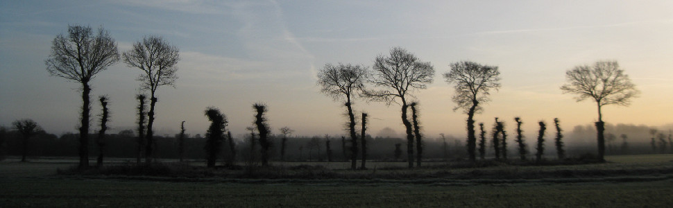 Paysage arbres